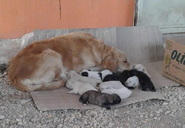 Sevimli köpek onuz doğurdu