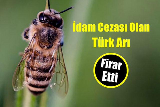 idama-mahkum-edilen-ancak-firar-eden-turk-ari-ile-ilgili-atilmis-komik-tweetler-18