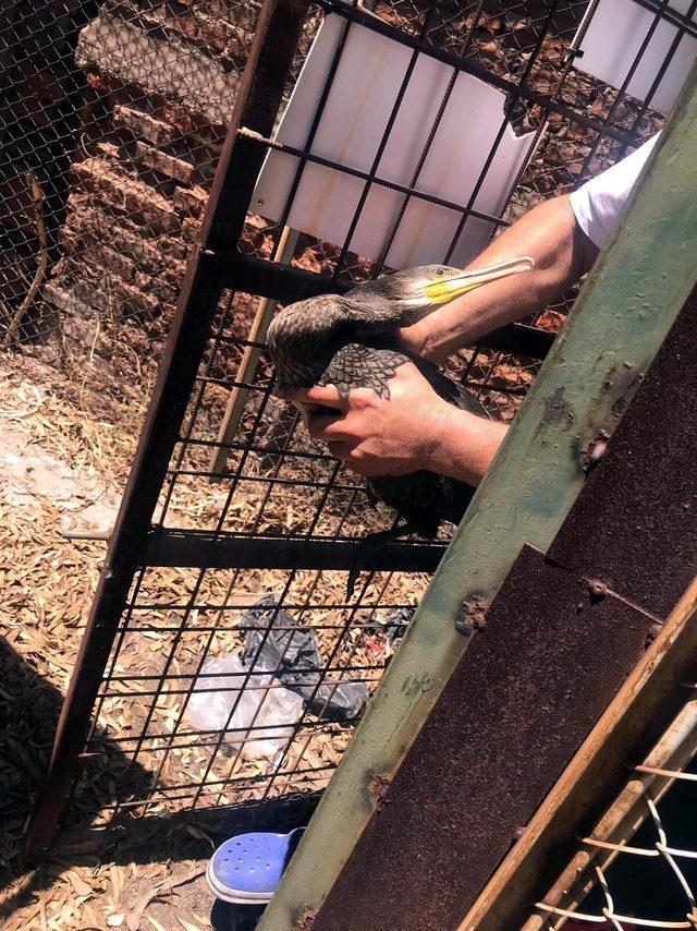 Sokakta bulunan yaralı karabatak, tedavi sonrası doğaya bırakıldı
