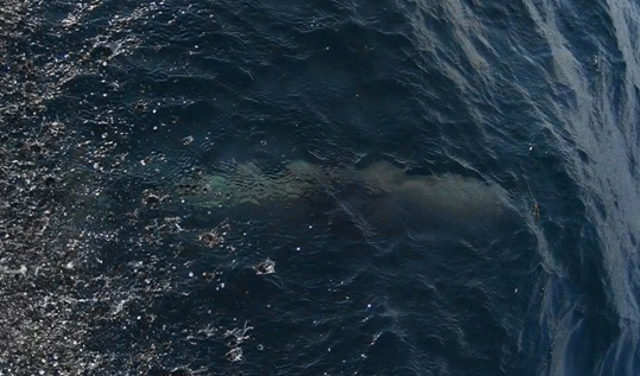 marmara-denizindeki-yunuslar-sayildi-_8067_dhaphoto3a