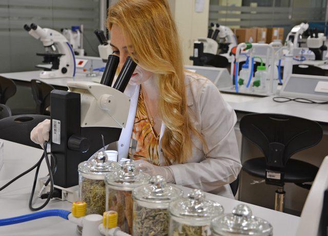 bitki-caylarinda-korkutan-laboratuvar-sonuclari-bocek-parcalari-kas-ve-kirpik-bulundu_7334_dhaphoto4