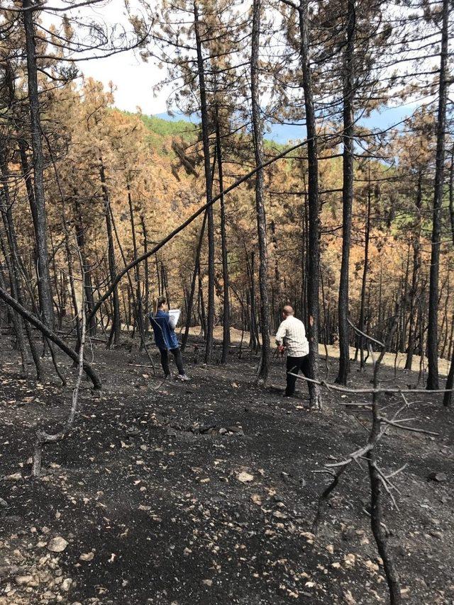 Boyabat'ta yanan bölgeler yeniden yeşillendiriliyor
