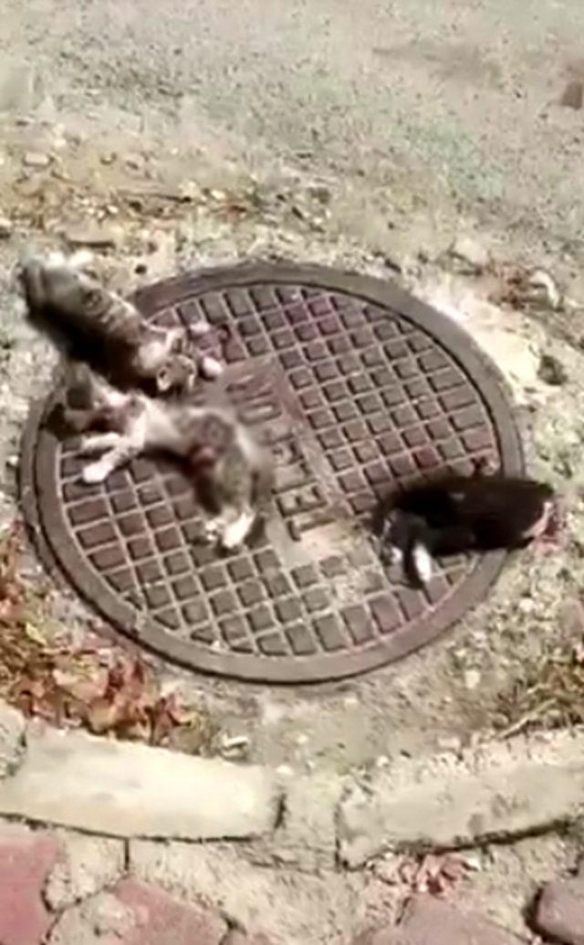 kedileri-parcalayarak-telef-etmisler_3678_dhaphoto2