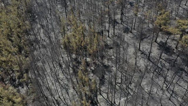Bodrum'da yanan ormanlık bölge havadan görüntülendi