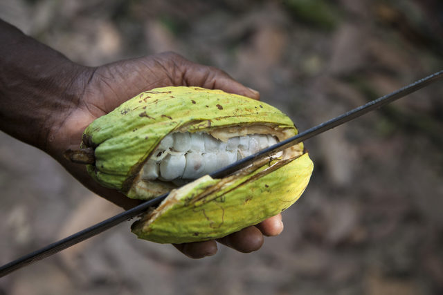 kakao (2)