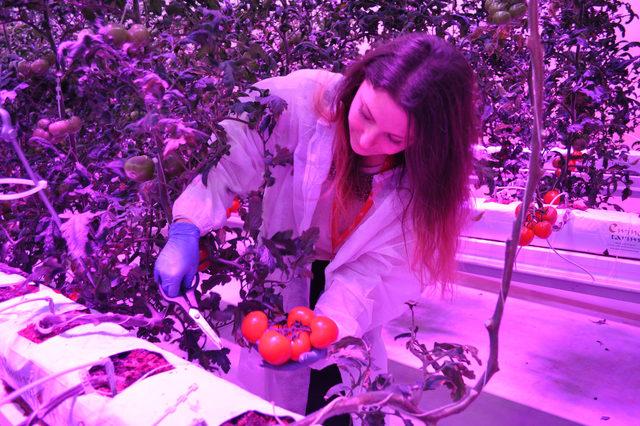 Kapalı seralarda led armatür ile salatalık yetiştirecek