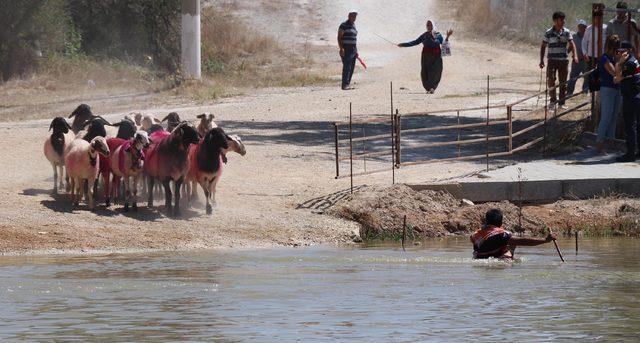 Denizli'de asırlık gelenek öncesi temsili Yörük göçü (2)