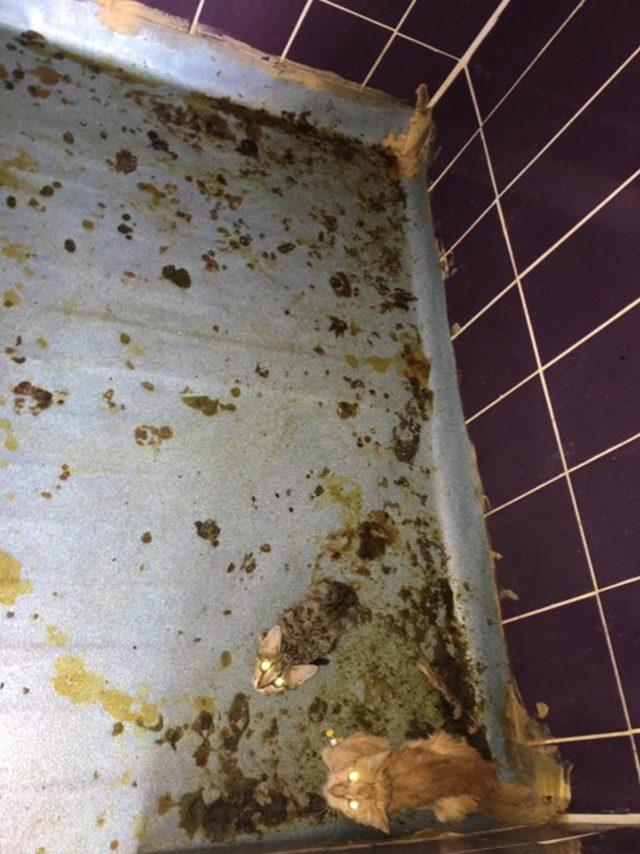 Mardin'de HDP'li belediyenin hayvanları açlığa terk ettiği iddiası