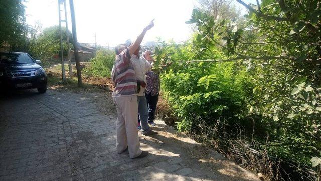 Efeler'de ilek ağaçları incelendi