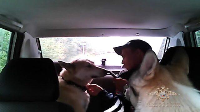 Rus polisinden örnek davranış: Kayıp köpekleri sahipleri ile buluşturdu