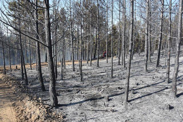 Kütahya'nın üç ilçesinde ormanlara giriş izinle olacak