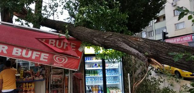 Elazığ'da ağaç kuvvetli rüzgarda devrildi