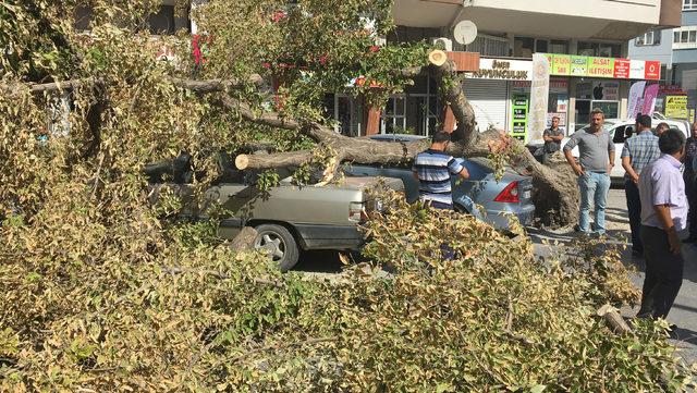 TIR'ın çarptığı ağaç, park halindeki otomobillerin üzerine devrildi