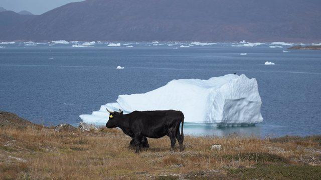 Grönland buzul