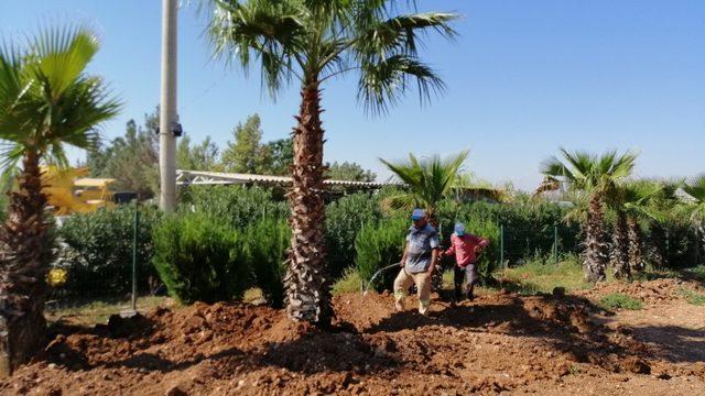 Kavşak çalışmasında ağaç titizliği
