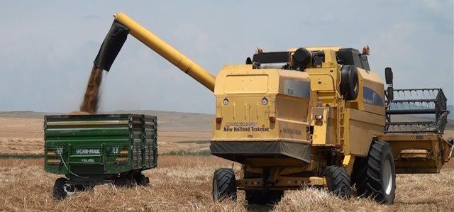 Süne ile mücadele buğdayda verimi artırdı