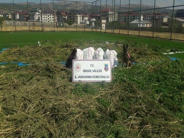 Bingöl'de 89 kilo esrar ve 270 bin kök kenevir ele geçirildi