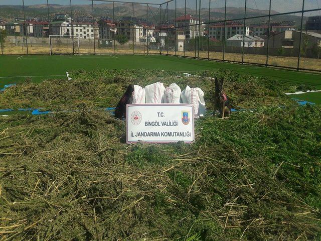 Bingöl'de 2 ton 700 kilo esrar ele geçirildi