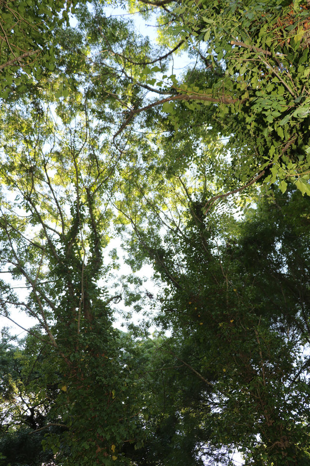 sadece-bilim-insanlarinin-girebildigi-orman-projeyle-gezilecek_5914_dhaphoto4