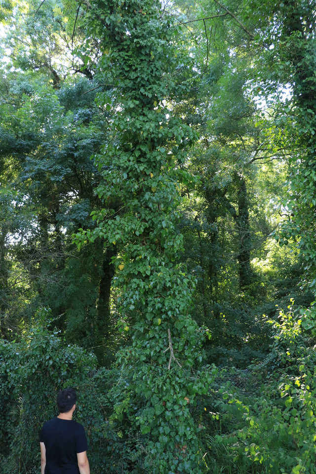 sadece-bilim-insanlarinin-girebildigi-orman-projeyle-gezilecek_5914_dhaphoto5