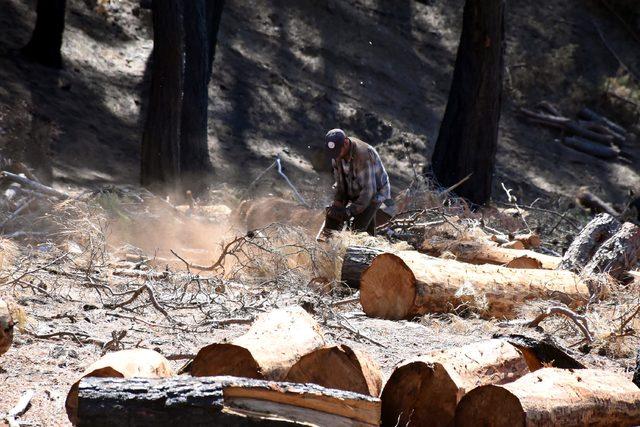 İzmir'de yanan orman alanı, şubata kadar ağaçlandırılacak