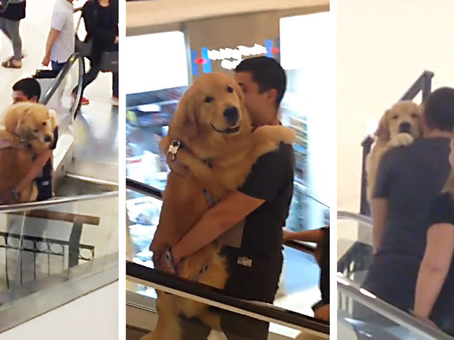 Yürüyen Merdivenden Korkan Minnoş Köpek