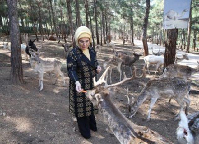 Emine Erdoğan'dan, 'Hayvanları Koruma Günü' mesajı