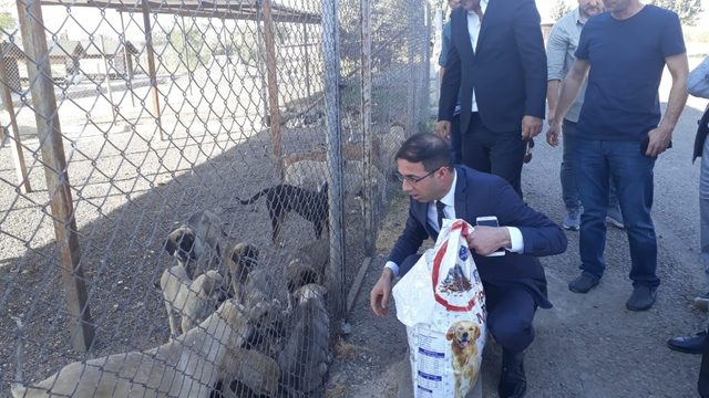 MHP'den Hayvanları Koruma Günü etkinliği