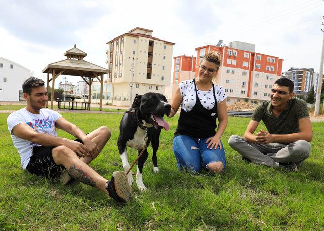 'Ruhsatı olmayan pitbull beslemesin'