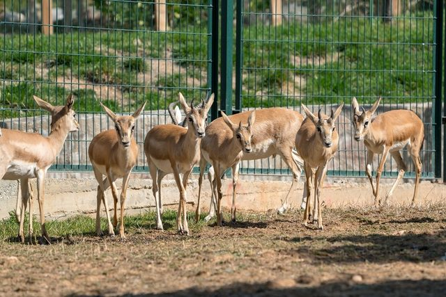 Hayvanat Bahçesinin yeni üyelerine ilgi