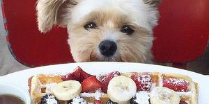 İnternetin Yeni Fenomeni: Gurme Köpek Popeye