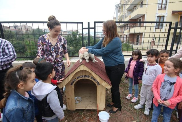 Büyükşehir'den okullara kedi ve köpek yuvası