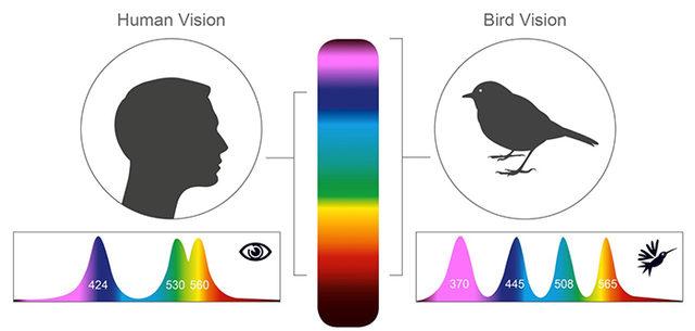 human-vs-bird-vision-1-5da4334880d33__700 (1)