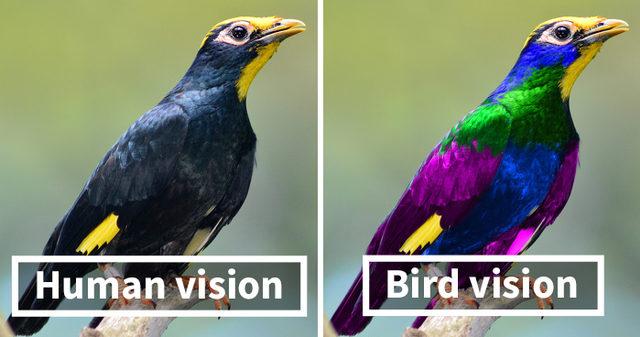 human-vs-bird-vision-5da46cc0df014__700