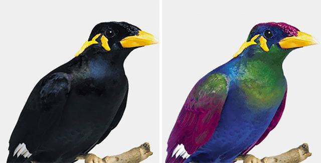 human-vs-bird-vision-5da475ccbf216__700 (1)
