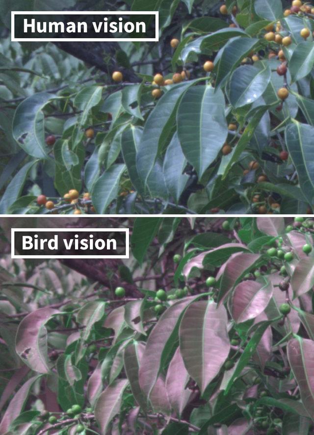 human-vs-bird-vision-5da4632357720__700