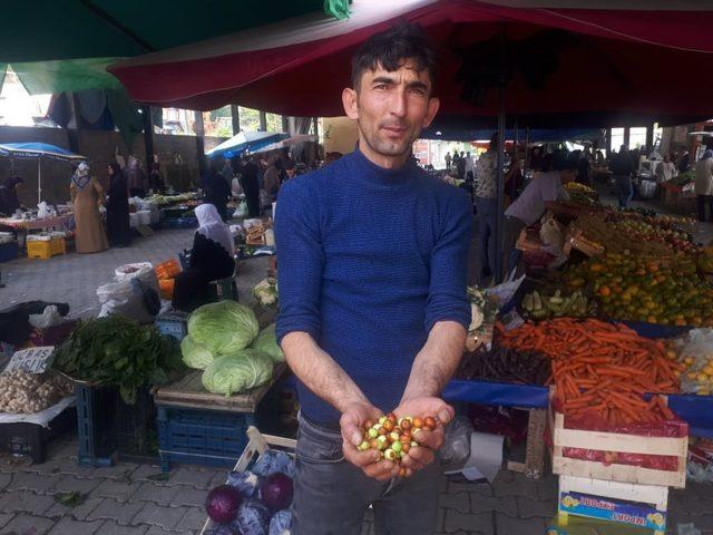 Akdağ'da doğal ortamda yetişen Hünnap'a ilgi