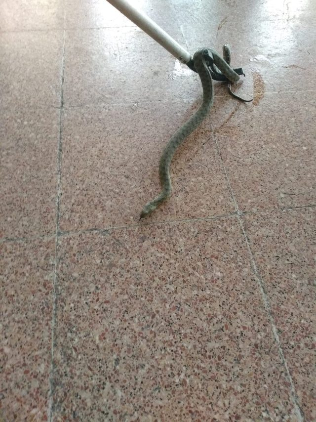 Otomobilde yılan paniği