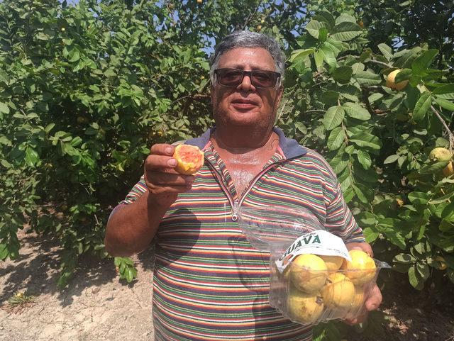 Hediye fidanla başladığı guava üretimini 1500 ağaçla sürdürüyor - Finans  haberlerinin doğru adresi - Mynet Finans Haber
