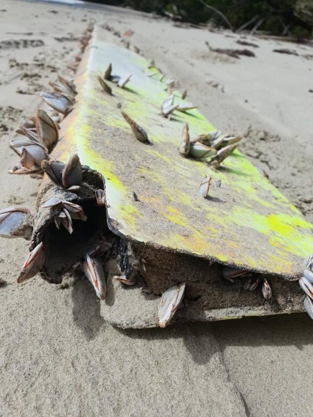 0_Search-for-MH370-takes-new-twist-as-debris-washes-up-on-Queensland-beach (1)