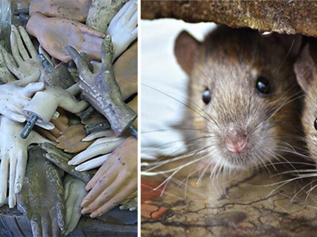 Heykel penisinden farelerle dolu kutuya: Havaalanı güvenliklerinin bulduğu en garip eşyalar