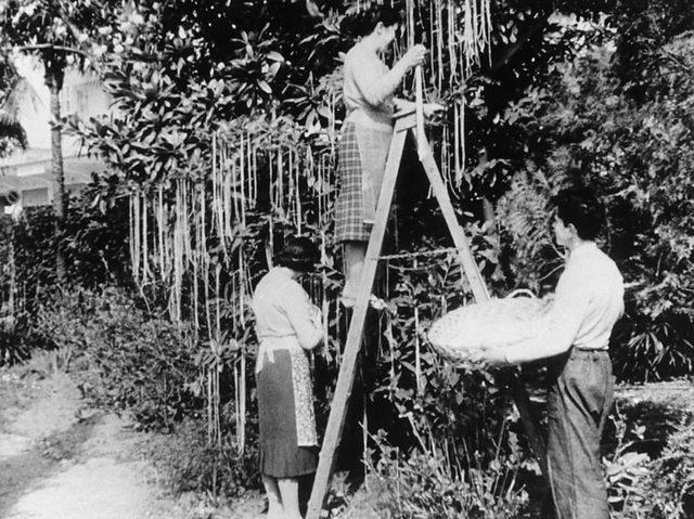 BBC Panorama programında İsviçre'de spagetti hasadındaki artıştan söz edilmişti