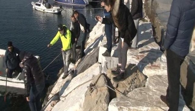 İstanbul'da bugün yaşandı! Bostancı sahilinde vatozlar karaya vurdu!