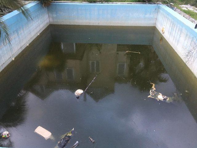 Villa havuzunda telef olmuş hayvanlar bulundu