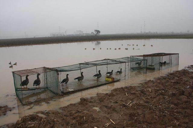 Gümeler imha edildi, kanadı kesilen kaz ve ördekler tedaviye alındı