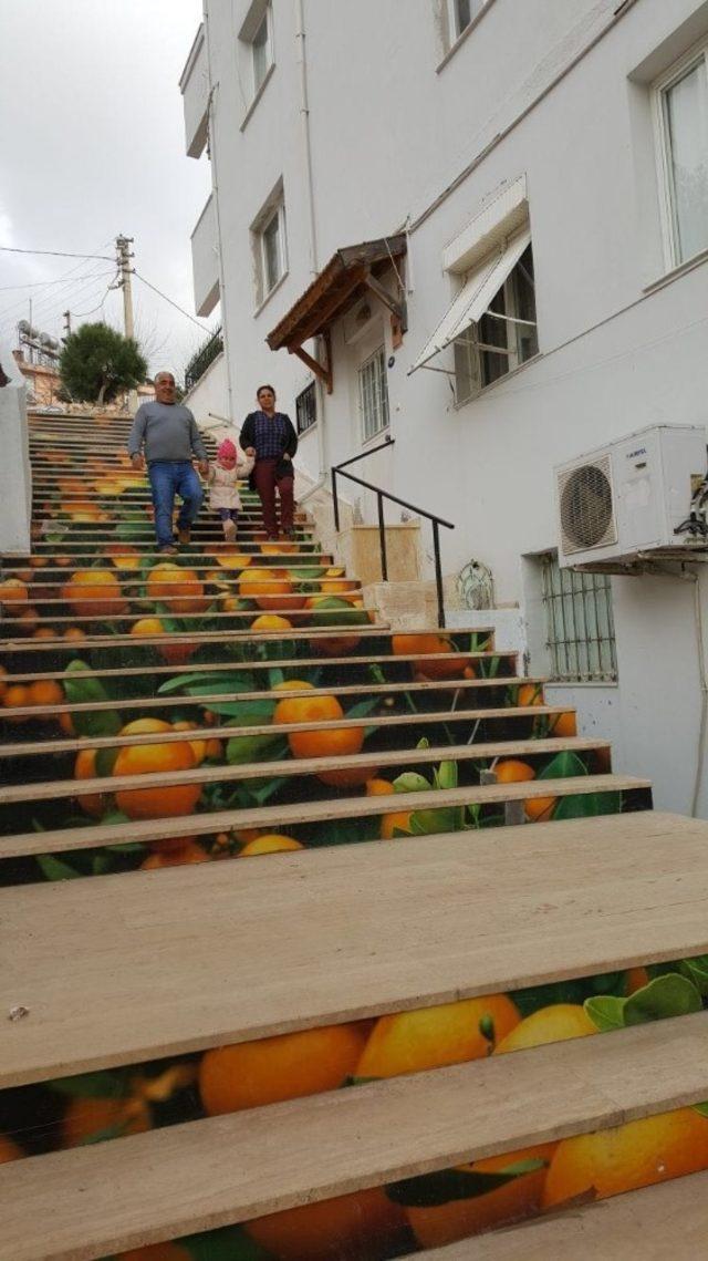 Menderes'te mandalina yolu