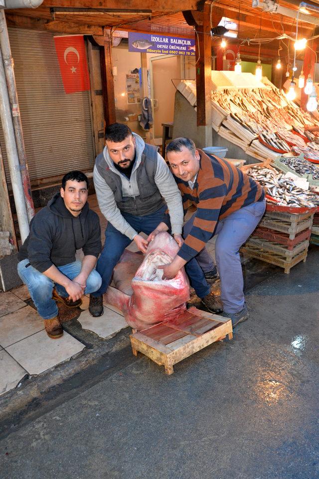 Balıkçıların ağına 300 kiloluk köpek balığı takıldı
