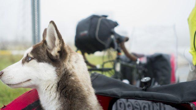 Hayvan sevgisine dikkat çekmek için pedal çeviriyorlar