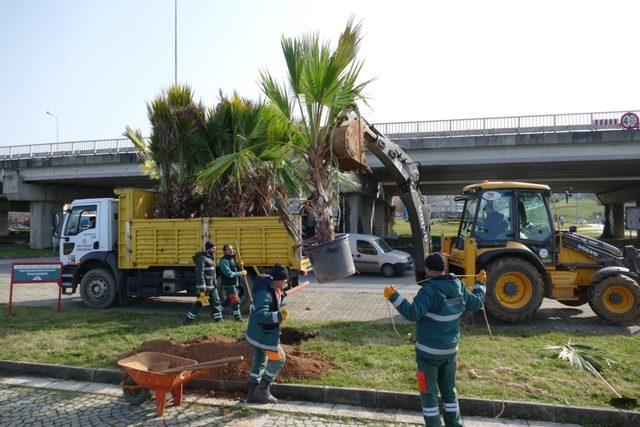 Büyükşehir Belediyesi ağaç dikimine  devam ediyor