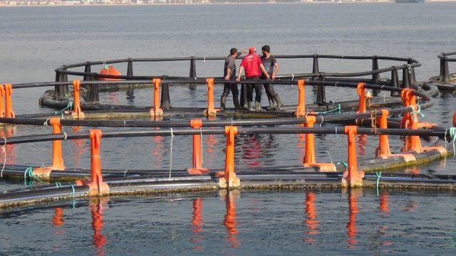 Silifke sahilindeki balık çiftlikleri kaldırıldı